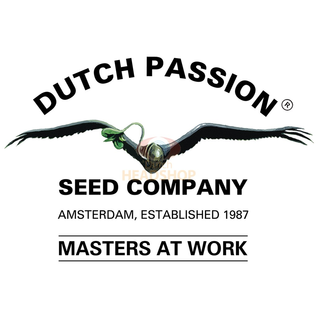 Frisian Duck Gefeminiseerd (5 Zaden) Dutch Passion