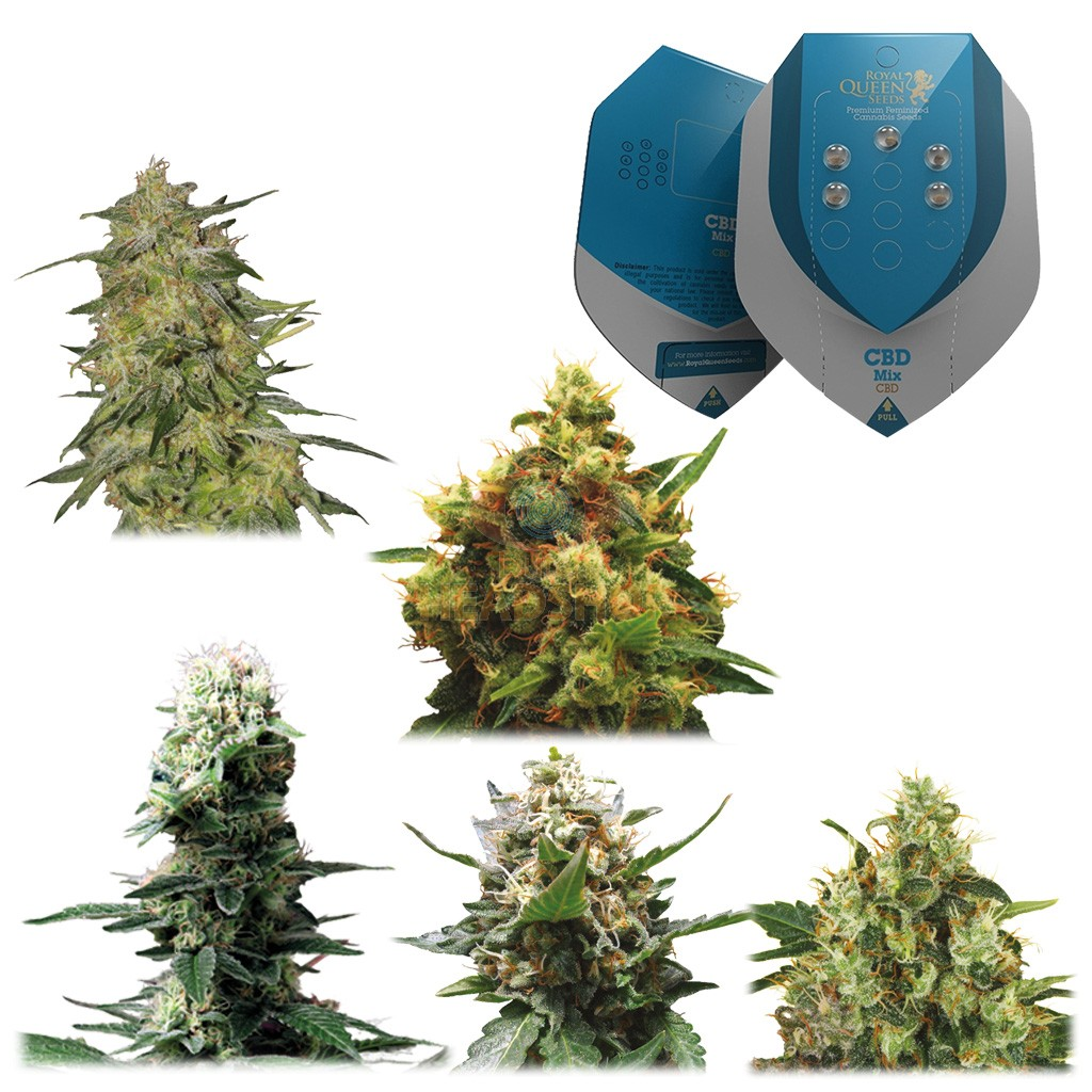 Medische Mix CBD (Royal Queen Seeds) 5 zaden