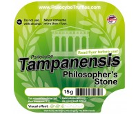 Magic Truffels Tampanensis 15 gram