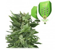 Royal Kush Automatic (Royal Queen Seeds) 5 zaden