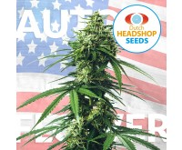USA Autoflower Mix (Huismerk) 5 zaden