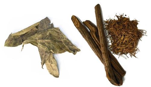 chacruna bladeren en banisteriopsis liaan